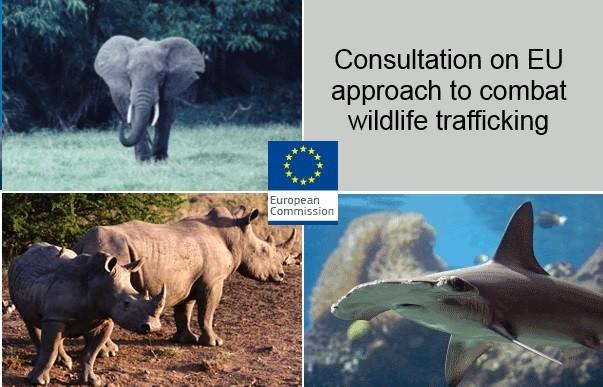 Traffico illegale di specie selvatiche. Aperta una consultazione pubblica