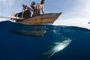 wwf-oceano-senza-pesci-2
